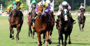 Vital strategies for the accumulators of horse racing