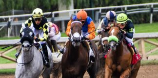 What are the principles underlying horse racing (in the United Kingdom)?